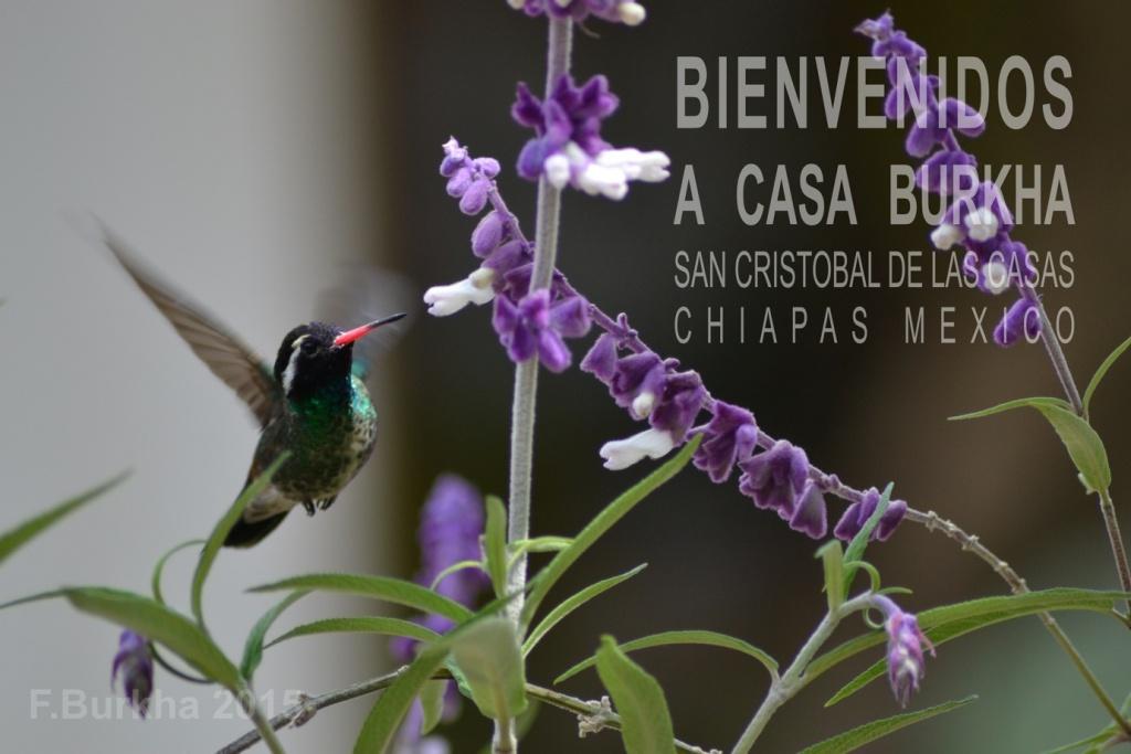 Jardin-colibri casa F-Burkha 2015 01