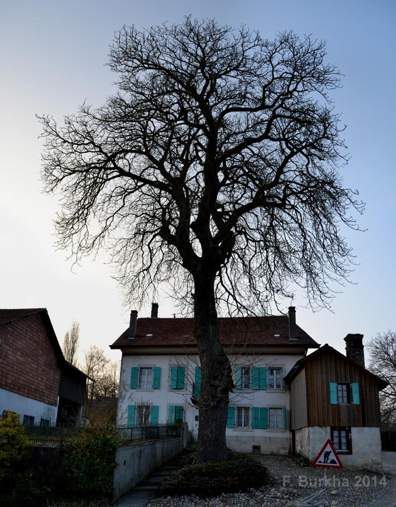 F Burkha danger arbre 2014