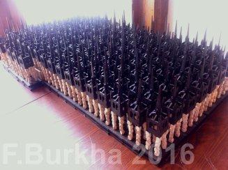 04 tour vacuva F-Burkha 2016