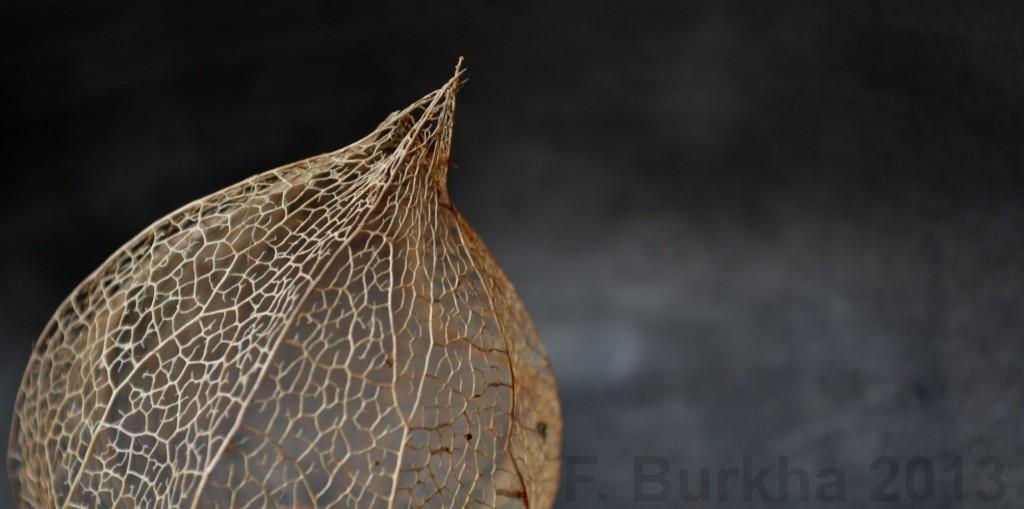 F-Burkha boule rouge 2013